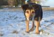 Stan psa wymaga pilnej interwencji weterynarza. Bolek ma m.in.  problemy z tylnymi łapami. Foto: Wojciech Basałygo