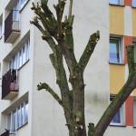 art-drzewo